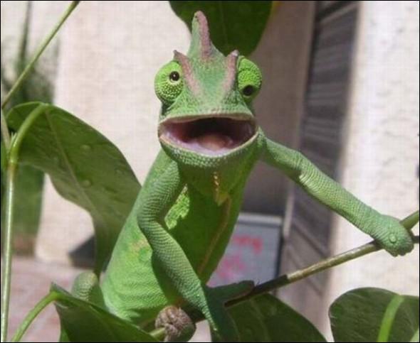 Vous l'avez reconnu, c'est l'iguane vert !