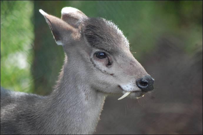 Cette photo est truquée, bien évidemment, cet animal ne peut pas avoir des dents pareilles !