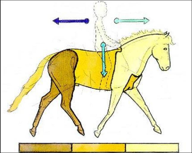 le galop 1 quiz qcm chevaux galop 1. Black Bedroom Furniture Sets. Home Design Ideas