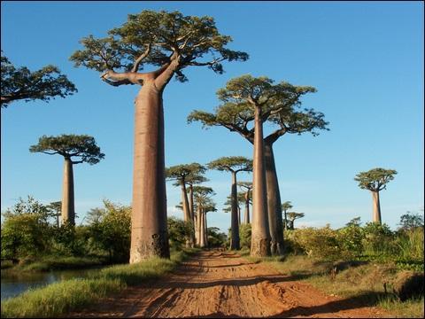 Découvrez ce pays grâce à cet arbre très particulier !