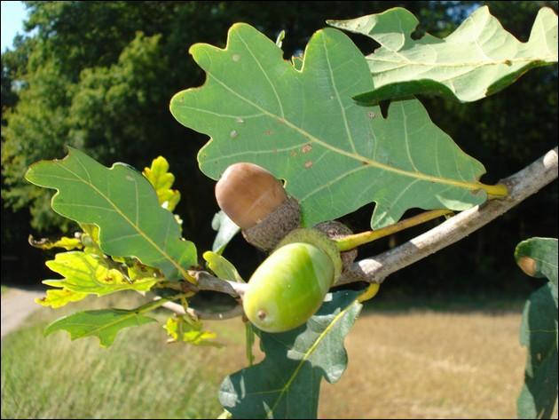 Trouver la réponse à cette photo vous évitera de passer pour le fruit de cet arbre !