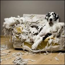 Une punition affligée à un chien lors d'une bêtise doit être :
