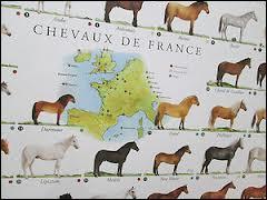 Quelle est la première région équine de France ?