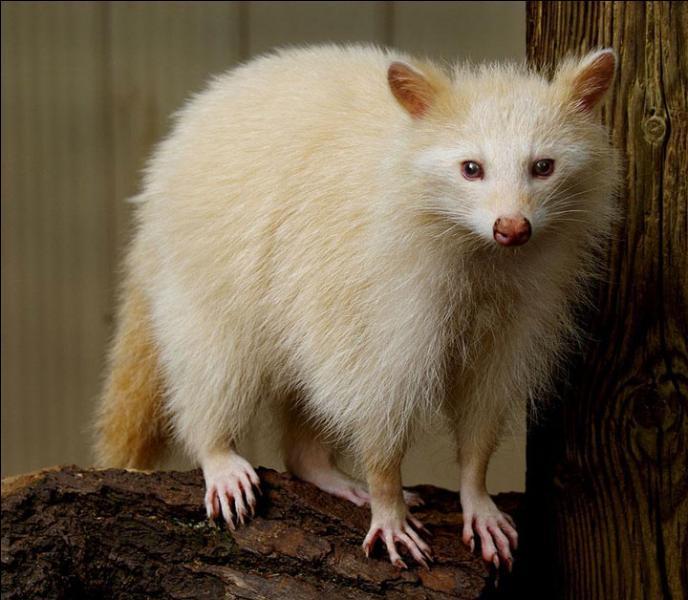 Pour t'aider à trouver le nom de cet animal, je vais te donner un indice : propreté !