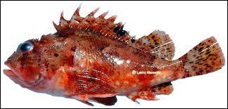 Le calembour suivant : « Les rats s'cassent » font allusion à une espèce de poissons. Laquelle ?
