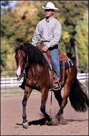 Que porte un cavalier western ?