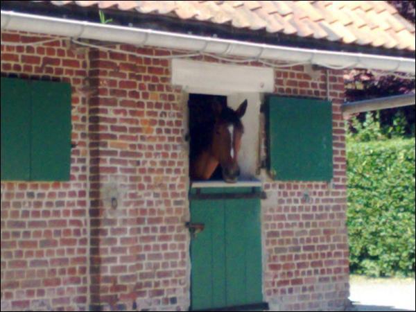 Quizz galop 1 nouvelle dition quiz chevaux galop 1 - Endroit ou dormir gratuitement ...