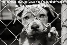 «Les animaux ont des droits : le droit d'être protégés par l'homme, le droit à la vie et à la multiplication de l'espèce, le droit à la liberté et le droit de n'avoir aucune dette envers l'homme. »
