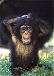 «On dirait que le singe n'a été fait que pour humilier l'homme et lui rappeler qu'entre lui et les animaux, il n'y a que des nuances. »