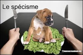 «La cruauté envers les animaux peut devenir violence envers les hommes. »
