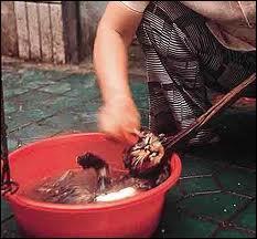 «On peut juger de la grandeur d'une nation par la façon dont les animaux y sont traités. »