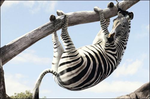 Quel est ce drôle d'animal perché à une branche ?