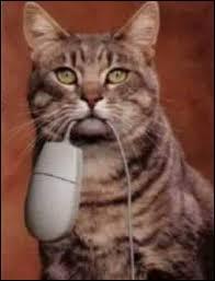Quel peut être le proverbe de ce chat ?