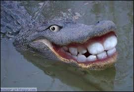 Quel est cet étrange animal avec de grosses dents ?