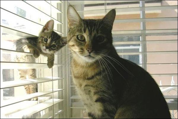 Dieu a inventé le chat pour que l'homme ait un tigre à caresser chez lui !
