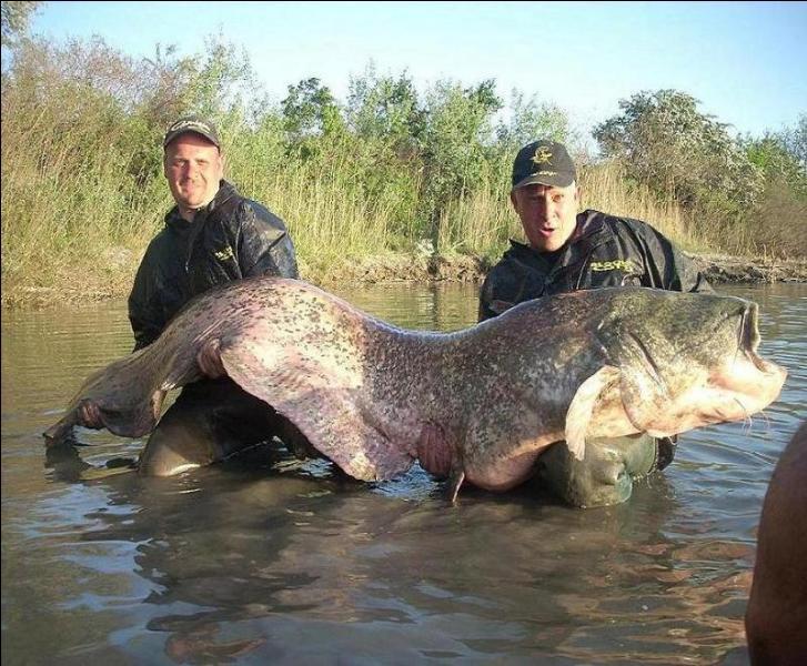 Dans quel pays ou région pouvez-vous pêcher ce poisson ?