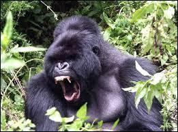 Le Gorille est une attraction de Nigloland. Vrai ou faux ?