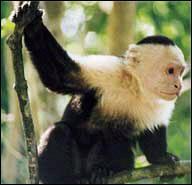 Quel est cet animal, réputé pour être particulièrement sociable ?