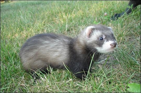 Quel est cet animal, considéré comme un nouvel animal de compagnie ?
