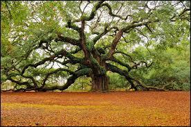 Un arbre se dit en anglais ...