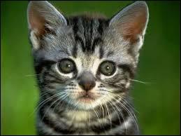 Un chat se dit en anglais ...