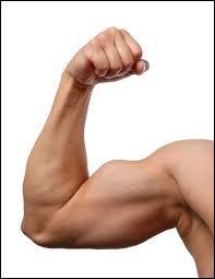 Le bras, se dit en espagnol ...