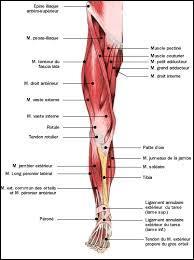 La jambe, se dit en espagnol ...