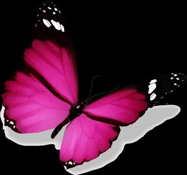 Et ce magnifique papillon ? (1 seule réponse)