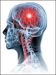Le cerveau reçoit des informations venant de tout le corps par l'intermédiaire ...