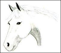 Quelle attitude faut-il avoir avec ce cheval ?