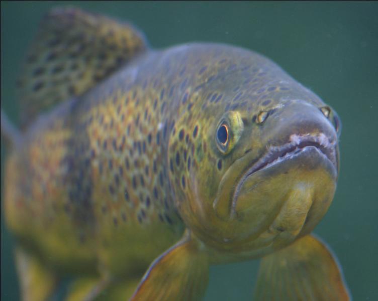 10 mots anglais autour des poissons et de la pêche