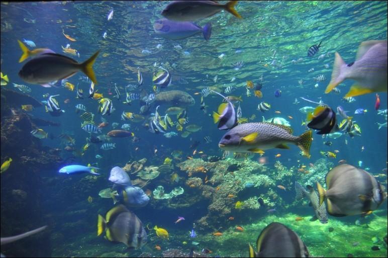 """""""Nausicaa"""" de Boulogne-sur-Mer n'est pas un aquarium comme les autres. Ludique, scientifique et pédagogique, il axe ses collections sur les relations entre l'homme et la mer."""