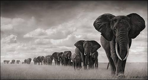 Comment voyez-vous les éléphants après avoir abusé du cannabis ?