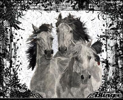 """Dans son recueil """"Paroles"""" Prévert écrit """"Dans les manèges du mensonge, le cheval de ton sourire tourne ..."""" Quelle couleur donne-t-il au cheval ?"""