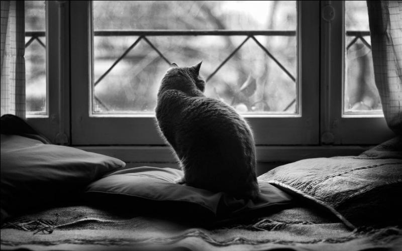 Quelle couleur revêt le chat du roman de Boris Vian ?