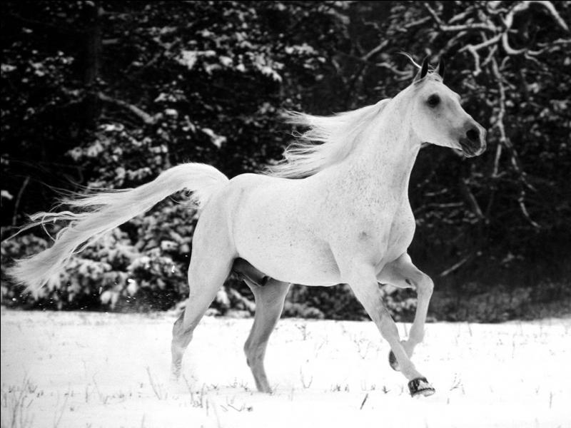 Quelle couleur avait le cheval dans un roman d'Elsa Triolet ?