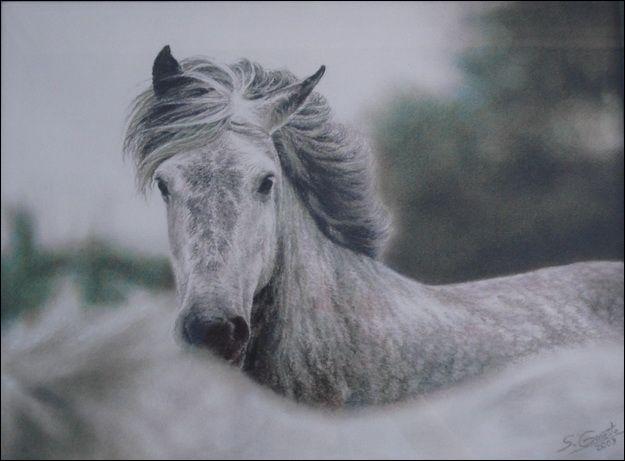 Quelle était la couleur du poney de John Steinbeck ?