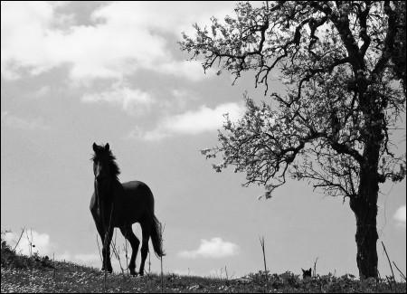 Quelle couleur associe-t-on au petit cheval de Brassens ?