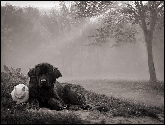 Quelle couleur revêt le chien de Georges Simenon ?