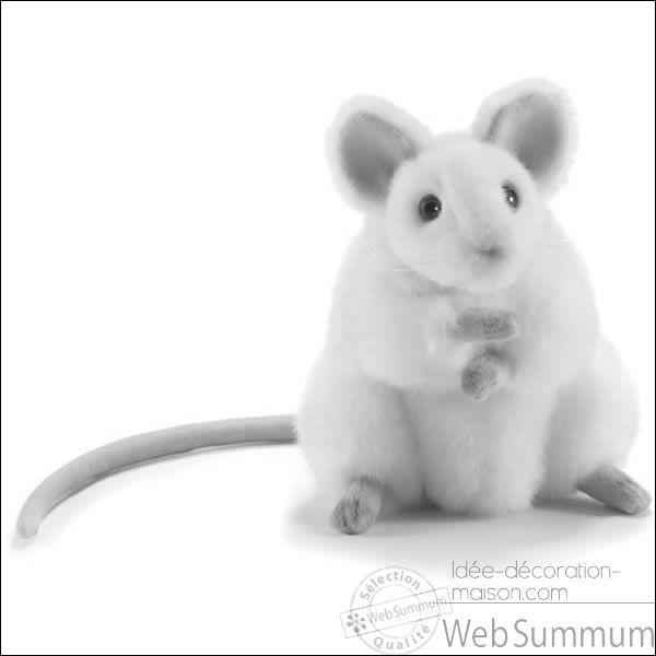 Comment est la souris dans une comptine ?