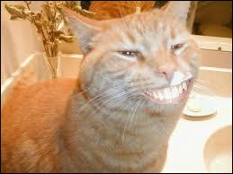 Que renferme la bouche de ce chat ?