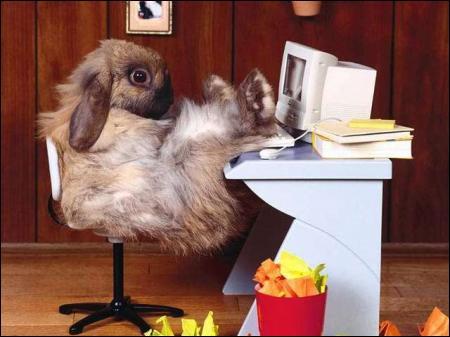 Devant quoi est assis ce lapin ?