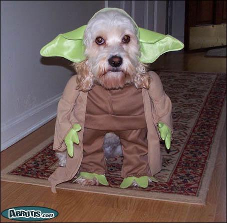 En quoi est déguisé ce chien ?
