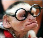 Que porte ce singe qui n'est pas très normal ?