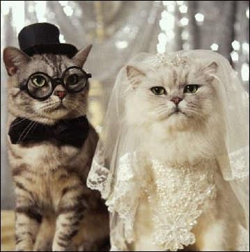 Où se situe la mariée ?