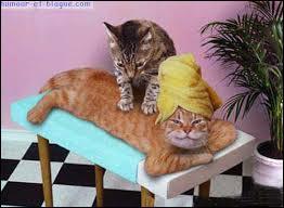 Que fait le chat en haut à l'autre chat allongé ?