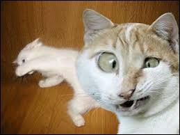 Que fait ce chat un peu (beaucoup) bizarre ?
