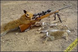 Quelle est la femelle du renard ?