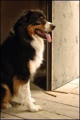 Comment s'appelle le chien qu'Alex et ses amis trouvent sur l'île mystérieuse ?