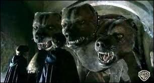 Dans le tome 1, comment se nomme le chien à 3 trois têtes dans l'endroit interdit ?